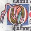 initial O incorporating a bird