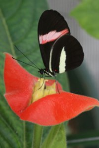 The evolution of colour patterns in south american Heliconius butterflies
