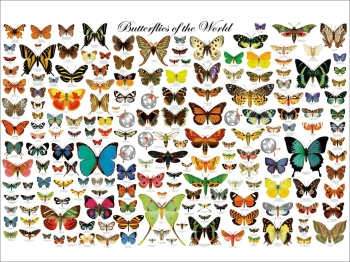 Slide from Dr John Davey's lecture on butterfly wing patterns
