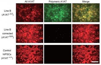 Immunofluorescence image