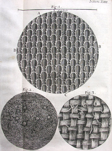 Micrographia Some Physiological Descriptions of Minute ...