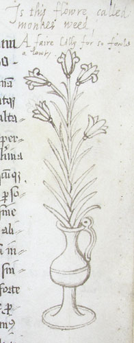 marginal drawing of a vase of lilies