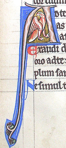 initial A incorporating a bird