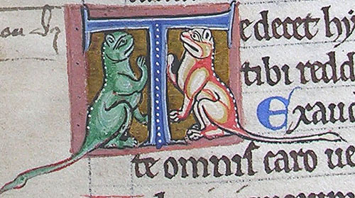 initial T incorporating two cats