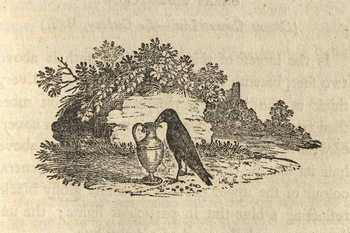 Illustration from Bewick's 'Birds'