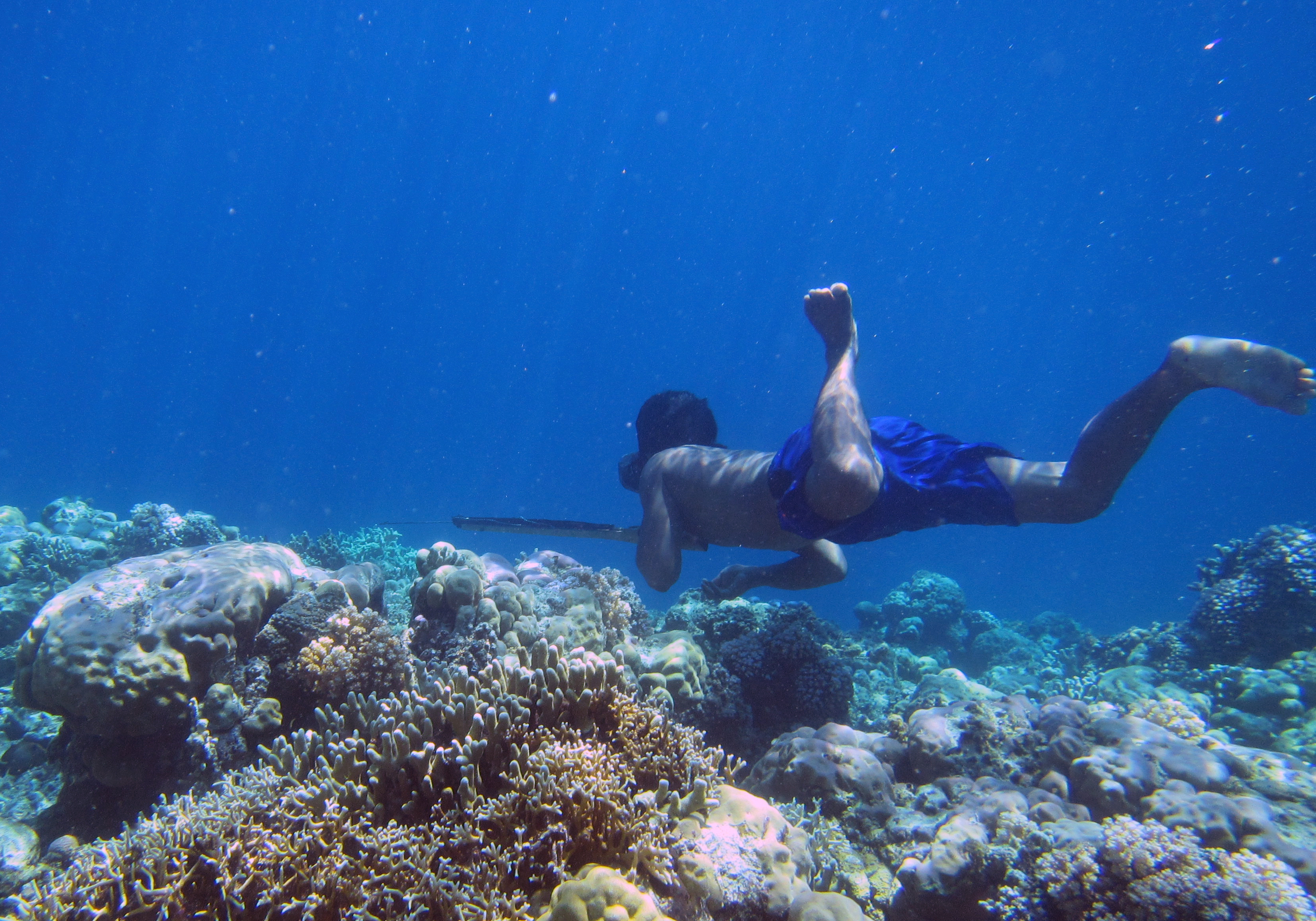 A Bajau diver hunts with a spear