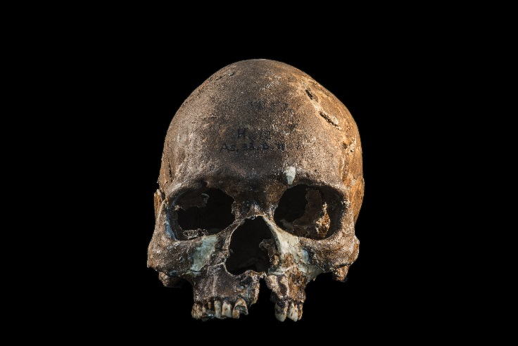 Complete skull from a Hoabinhian person from Gua Cha, Malaysian Peninsula. More photographs available on request.