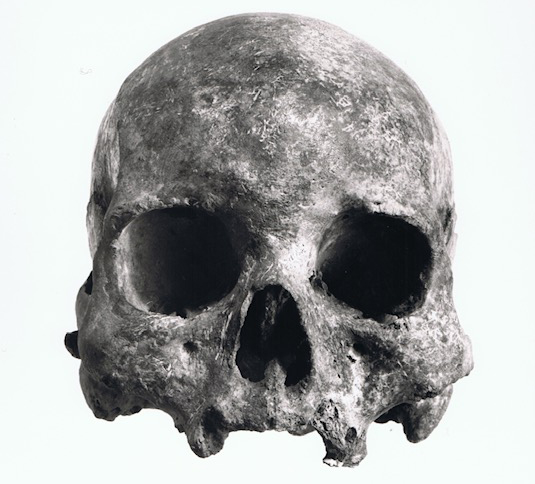 Skull from Lund's collection