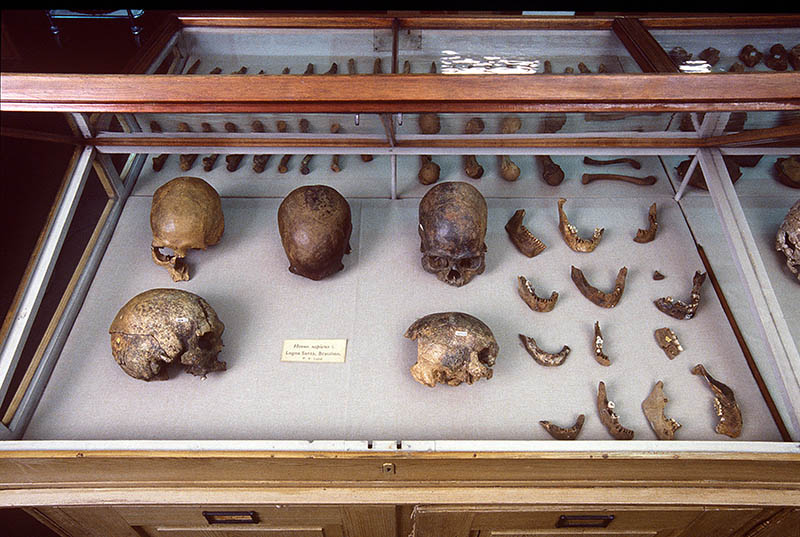 Skulls from Lund's collection